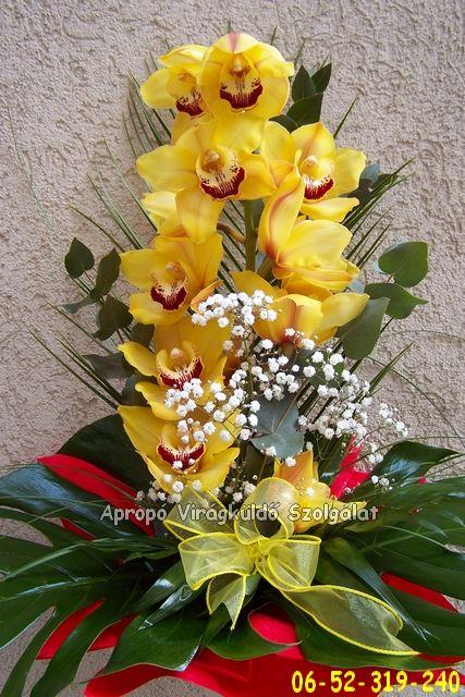 Pompás Orchidea